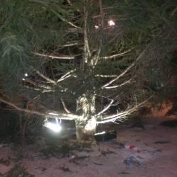 Installazione albero - 2